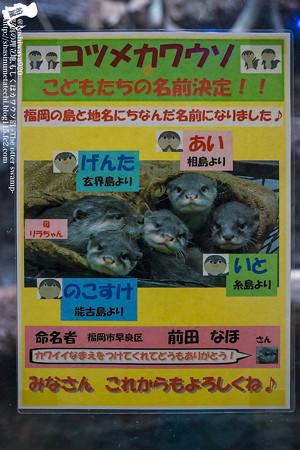 fukuoka140315002