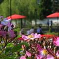 Photos: 春の公園