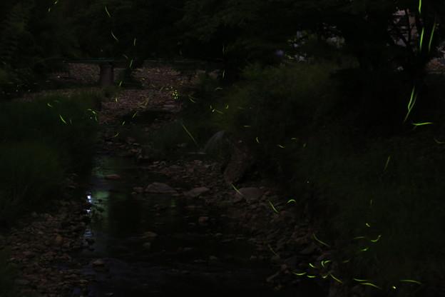 ホタルで夕涼み