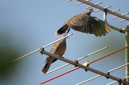 鳩が飛び立った直後の静止画像