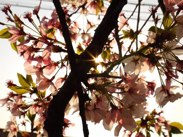 木漏れ日 ~桜からの贈り物~