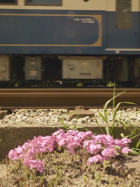 写真: 線路脇の芝桜(1)