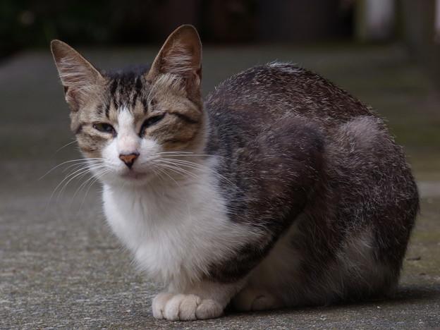 Photos: 早朝にて…2014.7.2?
