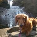 写真: 養老渓谷にて 紅葉狩り