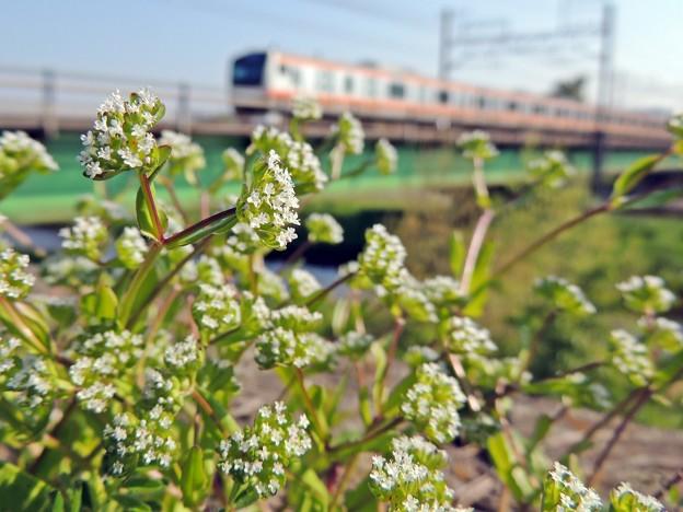 Photos: 土手に咲く花