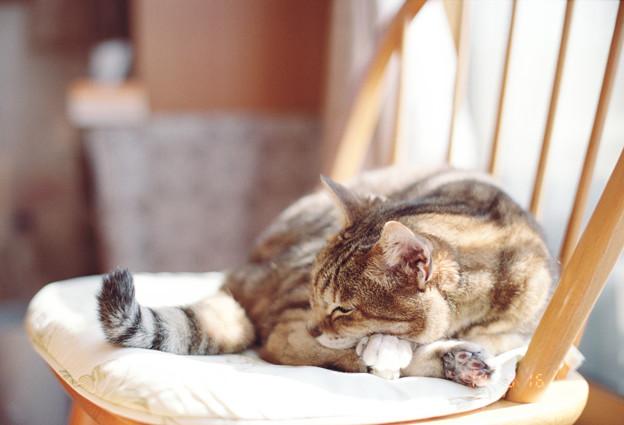 窓越しの日差しに微睡む