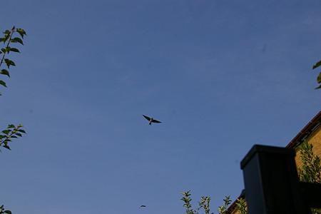 空を飛べる喜び