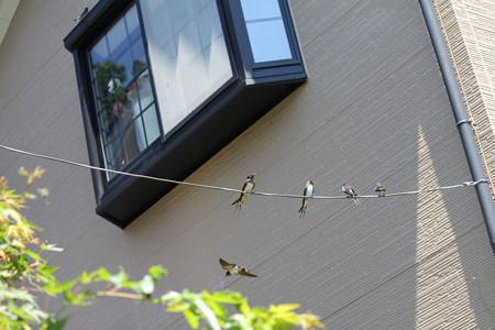 玄関前の電線