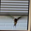 Photos: 小窓からの出入り