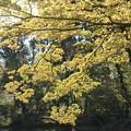 Photos: IMG_6440京都府立植物園・いろは紅葉の新緑