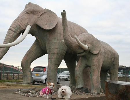 ナウマン象の像