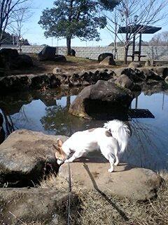 公園の池とココ