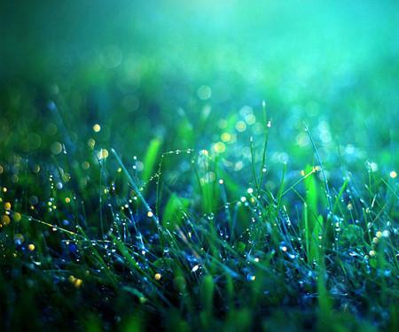 5-green-grass