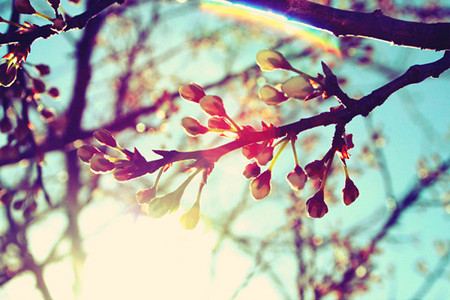 14-spring-in-the-air