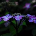 紫に映えて^^