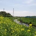 写真: 140503 鶴見川