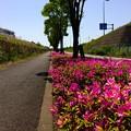 写真: 140510 尾根幹線