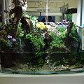 2009年度 第27回日本観賞魚フェア 水槽ディスプレイコンテスト 努力賞