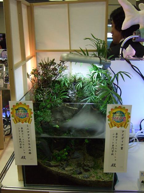 日本観賞魚フェアに向けて! – アクアフォレスト