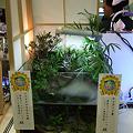 Photos: 2009年度 第27回日本観賞魚フェア 水槽ディスプレイコンテスト ミニアクアリウムの部 アイディア賞