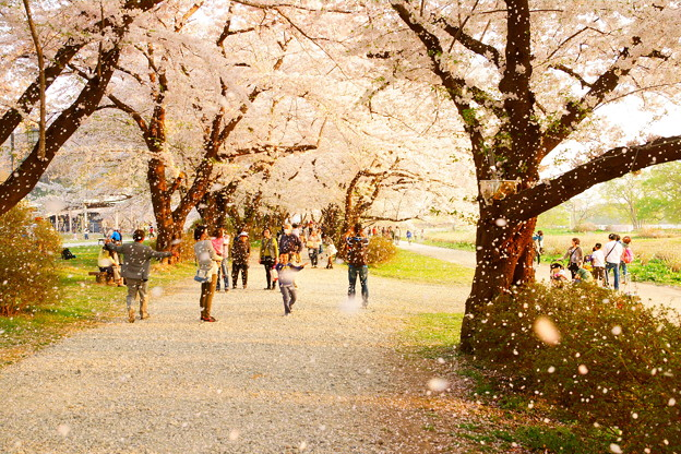 桜吹雪のここちよさ