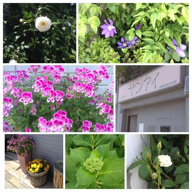 らうんじ サンアイ お店の周囲は花でいっぱい
