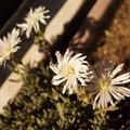 Photos: たくさん咲きました