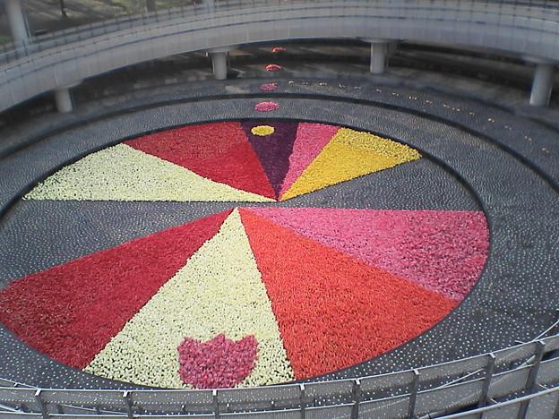 写真: 地上の円形花絵