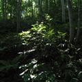 Photos: 森の中の光