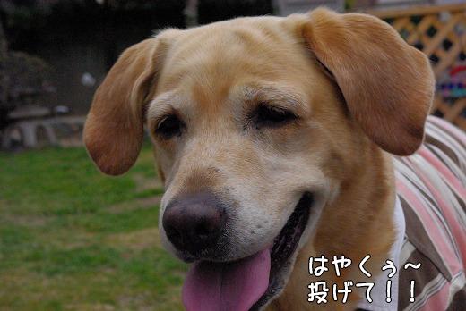 s-myu2009_0219(037)
