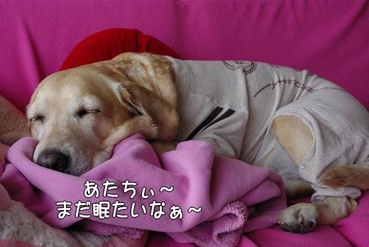 s-myu2009_0220(032)