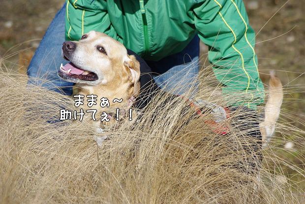s-myu2009_0221(145)