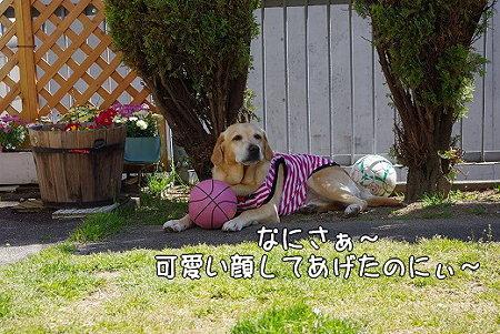 s-myu2009_0330(068)