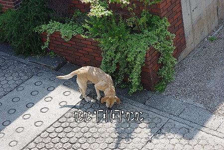 s-myu2009_0429(007)