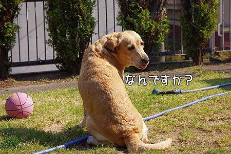 s-myu2009_0429(041)