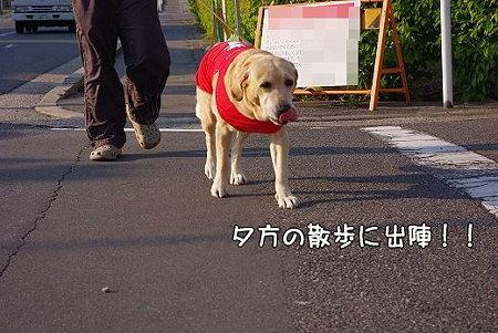 s-myu2009_0429(051)
