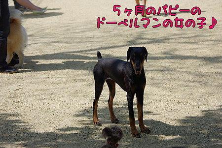 s-myu2009_0502(020)