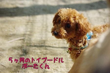 s-myu2009_0502(028)
