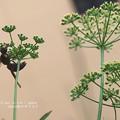Photos: 花蜜はみんな好き。(オオフタオビドロバチ)