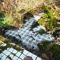 写真: 洗い場のタイル