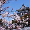 桜の岸和田城