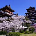 桜の桃山城