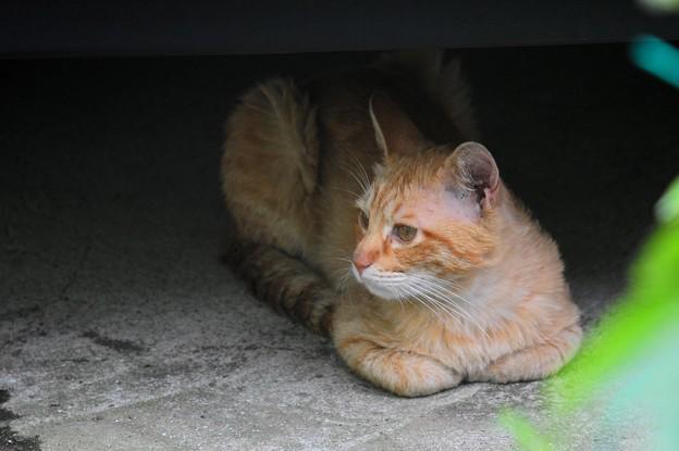 2009年6月21日のボクちん(5歳)