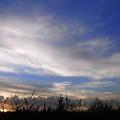 写真: 平城宮の葦原