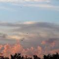 写真: ピンクの雲にツバメさん♪