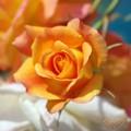 近所の薔薇<2>