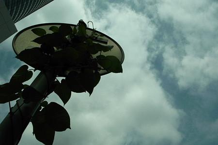 空と標識と蔓