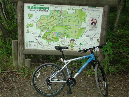 野幌森林公園 基線
