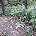 Photos: 野幌森林公園 カラマツコース