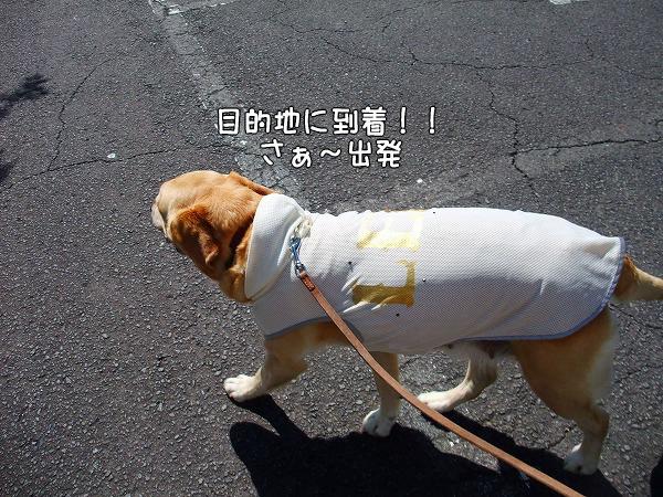 s-2008_0726myu0005